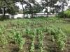 Foto 1 - Venta de terreno de 1,067 vrs2 en Santo Domingo