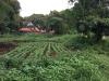 Foto 2 - Venta de terreno de 1,067 vrs2 en Santo Domingo