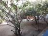 Foto 10 - Se vende Quinta en Carretera Sur