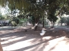 Foto 9 - Se vende Quinta en Carretera Sur