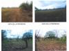 Foto 1 - Venta de Terreno en Carretera Nindiri Veracruz