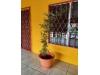 Foto 2 - Casa en renta por centro comercial managua