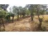 Foto 16 - Terreno en venta carretera a Ticuantepe